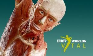 FillWyIxMTQ1IiwiNjg1Il0-bodyworlds-banner-large